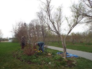 May 5 2015 Spring clean-up1